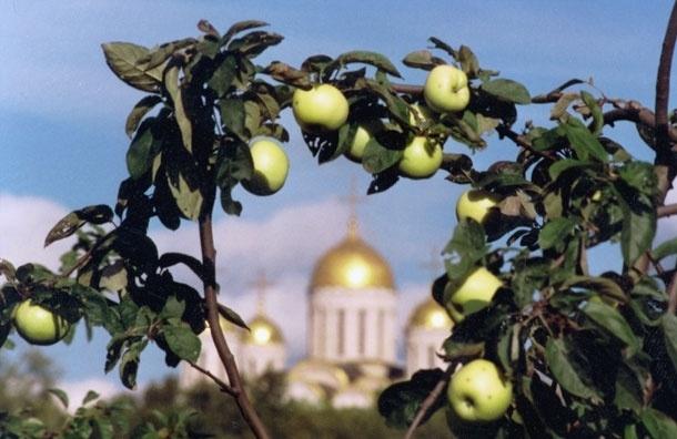 Какой мед подать к фруктам на Яблочный  Спас?