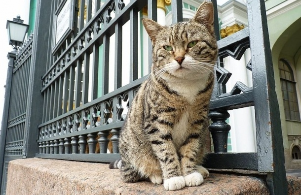 Художник из Узбекистана написал портреты эрмитажных котов, одетых в ливреи