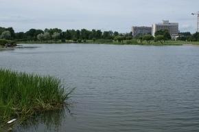 В водоеме Полюстровского парка утонул отдыхающий