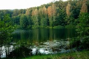 Возбуждено дело о продаже участка Сиверского леса в Ленобласти