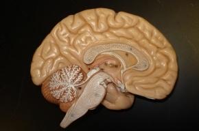 Ученые связали два человеческих мозга через интернет