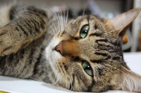 Убийца кота Жорика получил 10 месяцев ограничения свободы