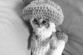 Умер самый милый котенок интернета