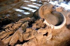 В Италии обнаружили скелет мамонта возрастом 1 млн лет
