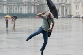 За минувшие сутки в Петербурге выпала треть месячной нормы осадков