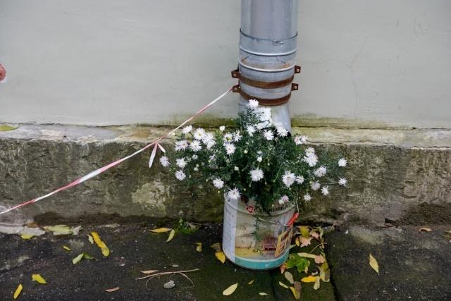 Цветник в Пушкине: Фото