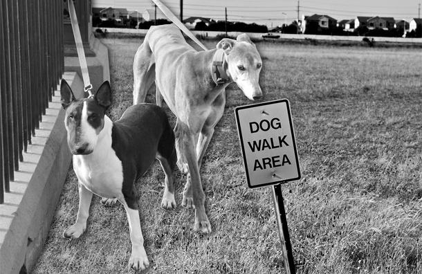 Милонов предложил составить карту площадок для выгула собак в Петербурге