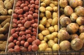 Наводнение в Приморье вызвало ажиотажный спрос на картофель
