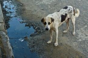 Мужчина, застреливший собаку, получил штраф в 30 тысяч рублей