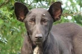 В Киеве нашли похожую на Путина собаку