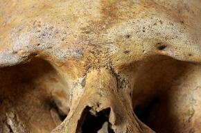 Животные растащили останки человека, погибшего у трассы в Ленобласти