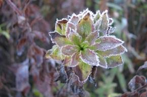 В Ленобласти 9, 10 и 11 сентября ожидаются заморозки