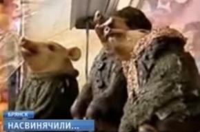 Реклама с поросятами-партизанами оскорбила жителей Брянска