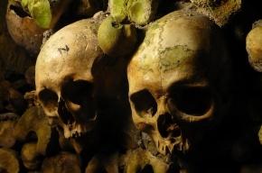Во время земляных работ в Репино нашли человеческие кости