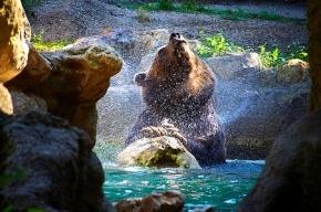 В Красноярском крае медведица растерзала двух мужчин