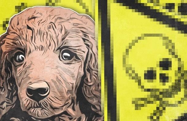 В Петербурге снова травят собак, начали с Васильевского острова