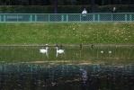 Летний сад после реконструкции: Фоторепортаж