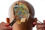 Проект Human Brain : Фоторепортаж