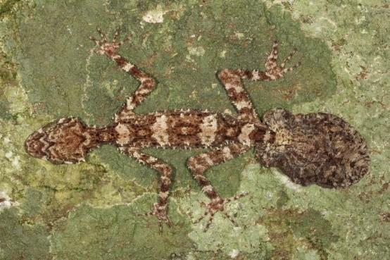 Новые виды животных, открытые в Австралии: Фото