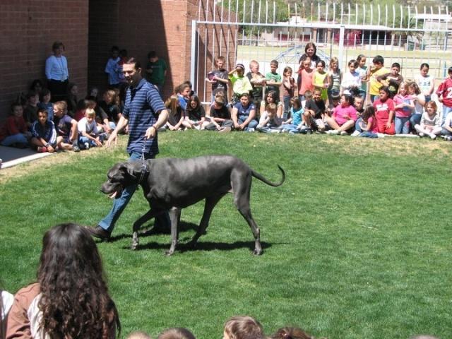Самая крупная собака в мире Гигантский Джордж: Фото