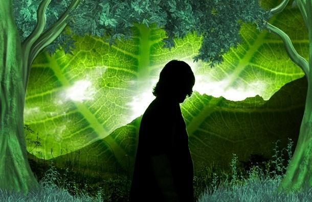 В Ленобласти нашли «черных экологов» — это «Гринпис» и другие