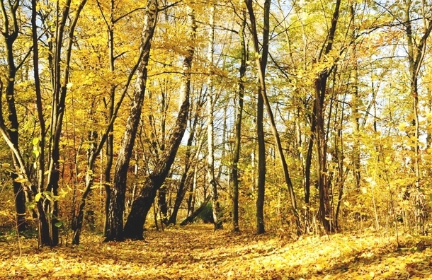 Здоровая осень