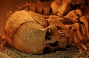 На месте будущей детской площадки нашли пять старинных гробов с останками