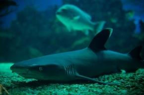 В Купчино построят новый океанариум с диковинными животными