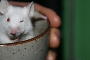 Новосибирские ученые создали лекарство от рака на основе грудного молока