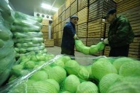В Петербурге идут обыски на Софийской овощебазе