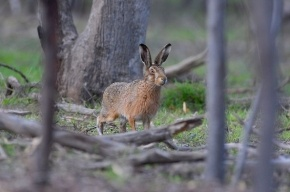 В Петербурге пройдет научная конференция по философии зайца