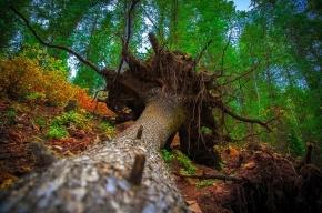 Шторм «Святой Иуда» повалил 295 деревьев в Петербурге