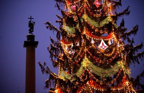 Жители Петербурга сами выберут новогоднюю ель на Дворцовой площади