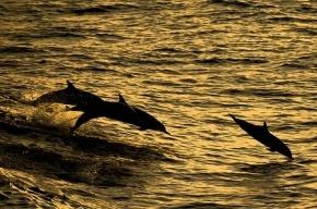 На восточное побережье США выбросилось более 750 дельфинов