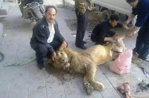 Голодные сирийцы съели льва из зоопарка Дамаска
