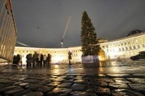 Искусственная ель на Дворцовой площади будет стоить 15 млн рублей