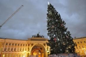 На Дворцовой площади будет искусственная елка