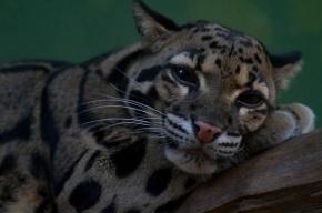 Ученые обнаружили в лесах Бразилии новый неизвестный вид кошек