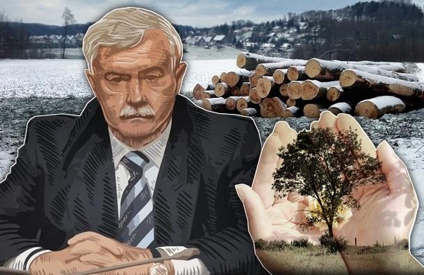 В Петербурге повышают штрафы за вырубку деревьев, но это не поможет