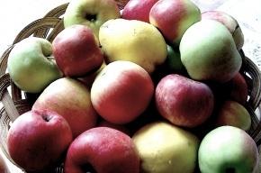 Ученые: одно яблоко в день может защитить от инфаркта