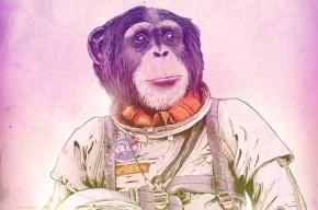 Иран во второй раз успешно запустил обезьяну в космос