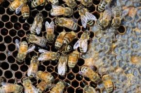 Россельхознадзор нашел в российском мёде запрещенные вещества
