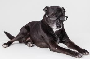 Ученые: собаки узнают на фото знакомые лица