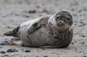 В Петербурге обнаружились популяции тюленей и полярных крачек