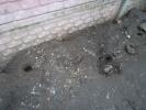Фоторепортаж: «Крысиные норы на ул. Дыбенко, 12/1»