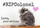 Полковник Мяу, самый длинношерстный кот в мире: Фоторепортаж
