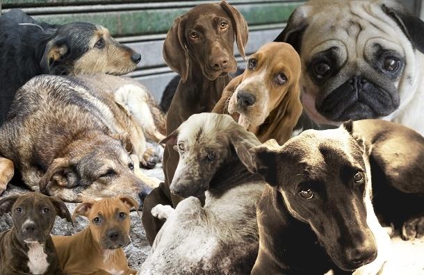 В Купчино отравленные собаки умирали на глазах у детей