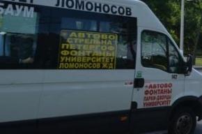 В Петергофе маршрутка с пассажирами врезалась в остановку