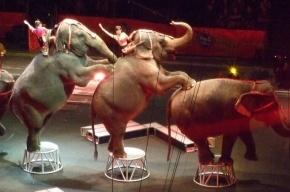 Петербургских циркачей с животными спасли от мороза в Югре