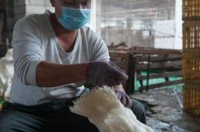 В Канаде человек впервые умер от птичьего гриппа H5N1